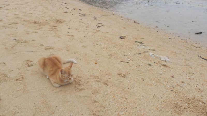 Kot plażowy